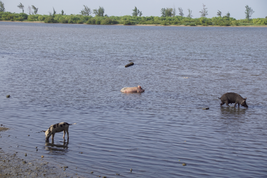 Fadiouth l'île aux coquillages, Sénégal